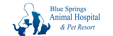 Blue Springs Animal Hospital