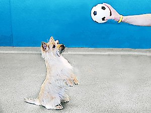 Doggie Daycare Dog Sits Up for Ball