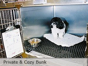 Dog Boarding Bunk - Kansas City - Blue Springs Animal Hospital