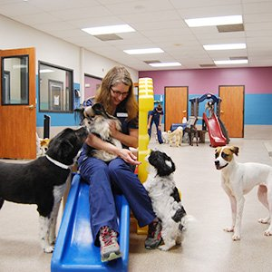 Dog Boarding Playtime - Kansas City - Blue Springs Animal Hospital