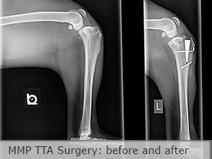 Xrays of a dog with a torn cruciate ligament before and after MMP TTA surgery by veterinarian Dr Joe Rodier in Kansas City