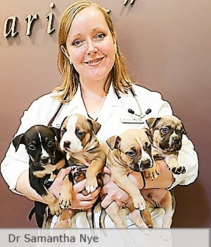 Dog Breeding Veterinarian Dr Samantha Nye with litter of puppies